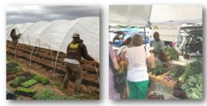 Cover photo for Register Now for the Upcoming Fall Farm and Market Tours!