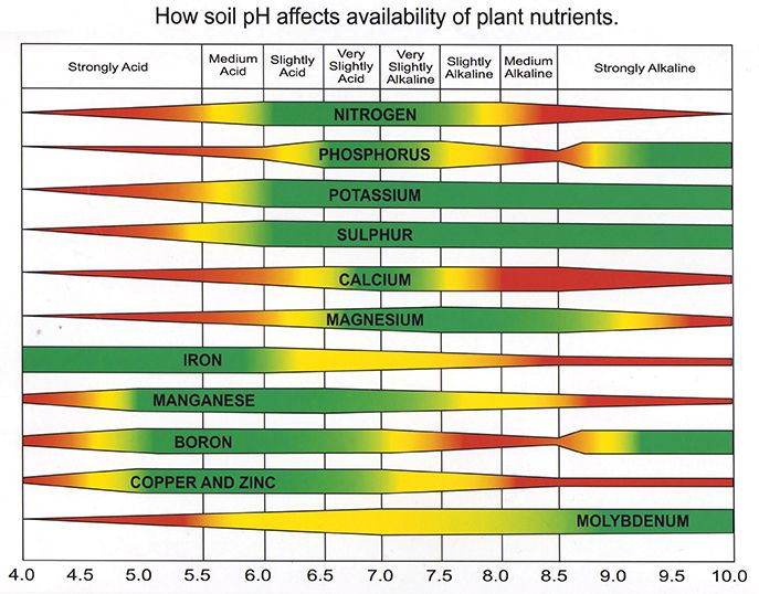 A graph of plant nutrients and their availability based on pH. Nitrogen is available from slightly acid to slightly alkaline, phosphorus and calcium are available from very slightly acidic to very slightly alkaline, potassium and sulfur are available from slightly acidic to strongly alkaline, magnesium is available from very slightly acidic to strongly alkaline, manganese, boron, copper, and zinc are all available from strongly acidic to very slightly alkaline, and molybdenum is available from slightly acidic to strongly alkaline