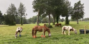Cover photo for Equine Management Virtual Mini Series