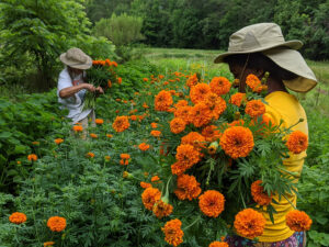 Cover photo for Virtual Panel Discussion Featuring Women Farmers of Chatham